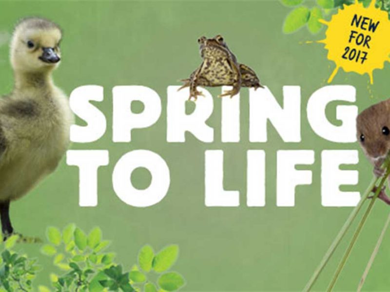 Spring to Life at Slimbridge, Until 4 June