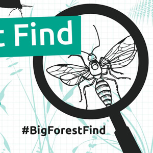 The Big Forest Find,  31 May, Westonbirt Arboretum